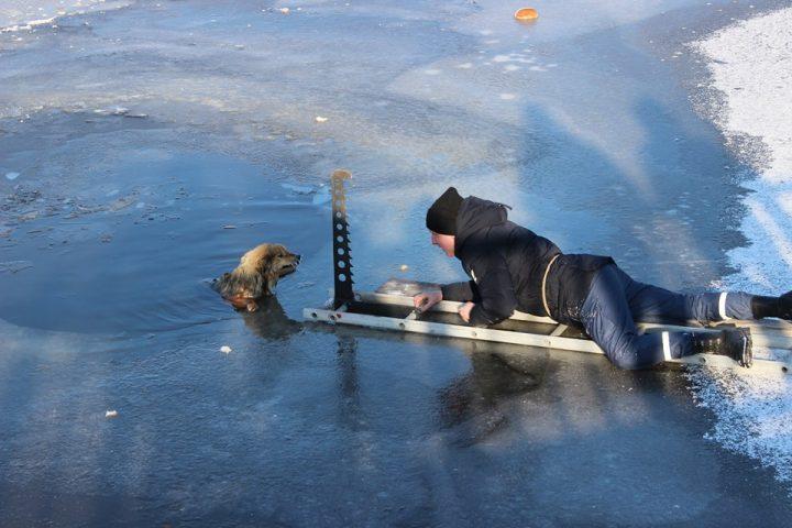 Прикарпатські надзвичайники рятували собак, які провалилися під кригу